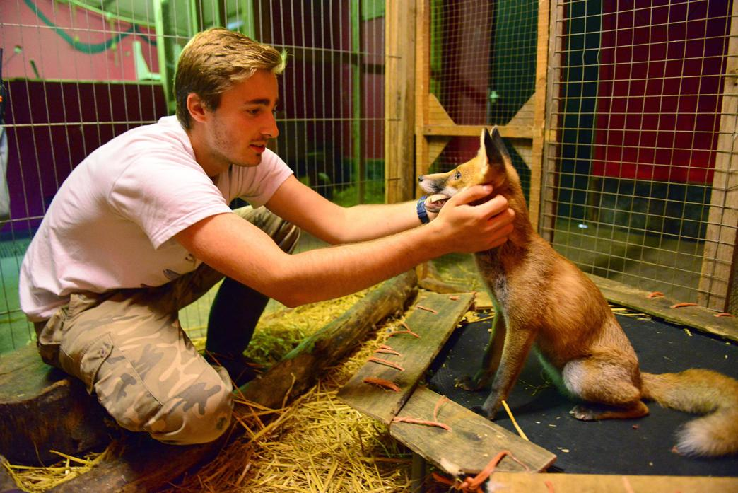 FRIENDLY: French student Quentin Fontaine with Heidi the fox at Wetheriggs Animal Centre 				    TM pic