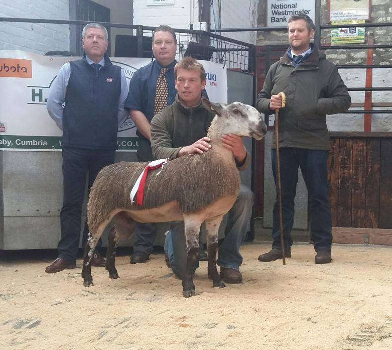 TOP SPOT: This Bluefaced Leicester ram lamb from J&K Metcalf, Barningham, was judged best in show