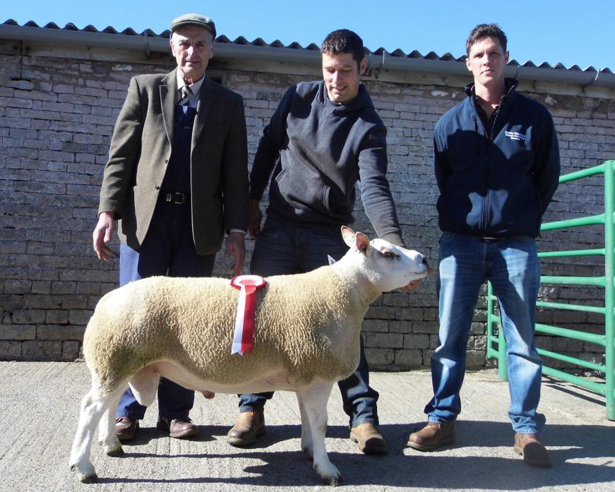 WHAT A BELTER: Nigel Foster, on behalf of LC&D Wearmouth, of Middleton-in-Teesdale, with the champion Beltex cross shearling, along with judge William Lawson and sponsor Peter Horn