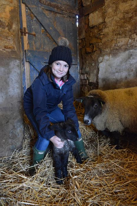 CHRISTMAS CRACKER: While most children were unwrapping their presents, ten-year-old Anna Herbert was welcoming a new arrivals to her burgeoning flock of Suffolks