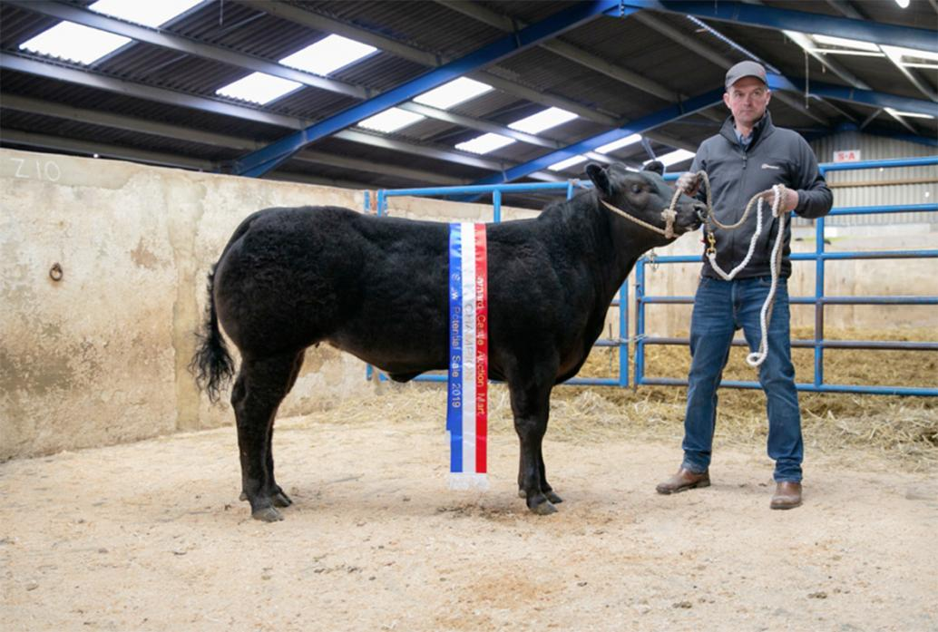 RECORD BREAKER: Robert Hutchinson with the champion heifer which sold for a Barnard Castle record of £6,600