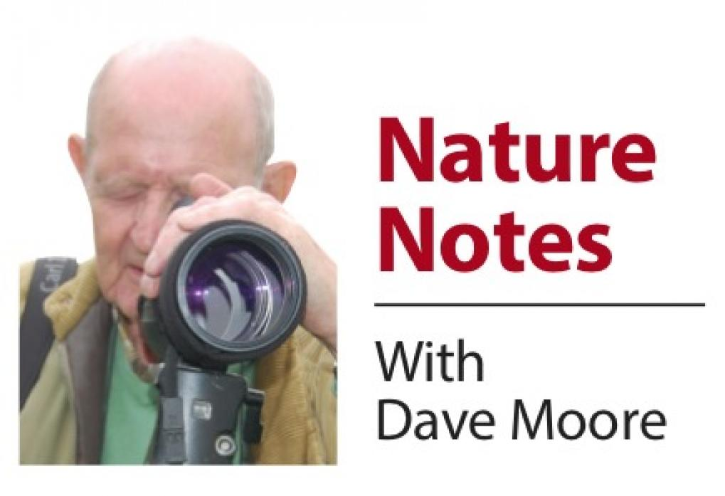 FAVOURITE SPECIES: Dave Moore