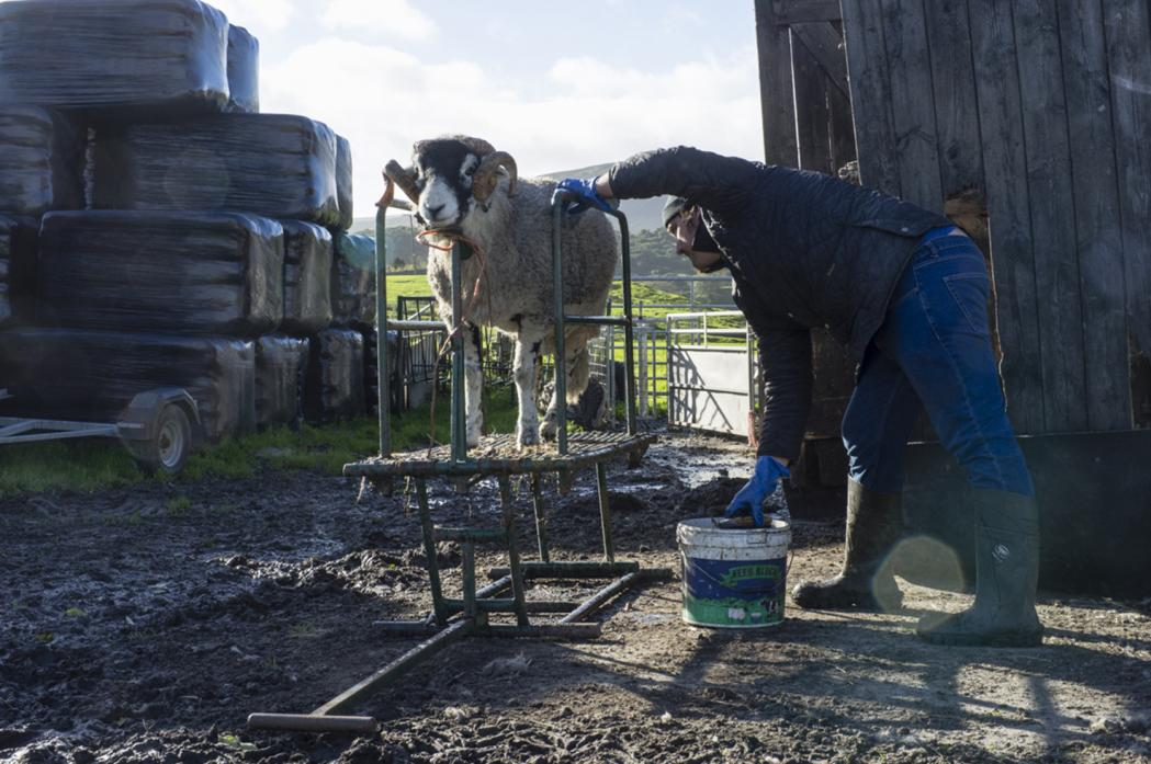 KNOWLEDGE BANK: Upper dale farmers' nous, built up over generations, should not be sidetracked or ignored, argues Ewan Allinson Photo: Louise Taylor