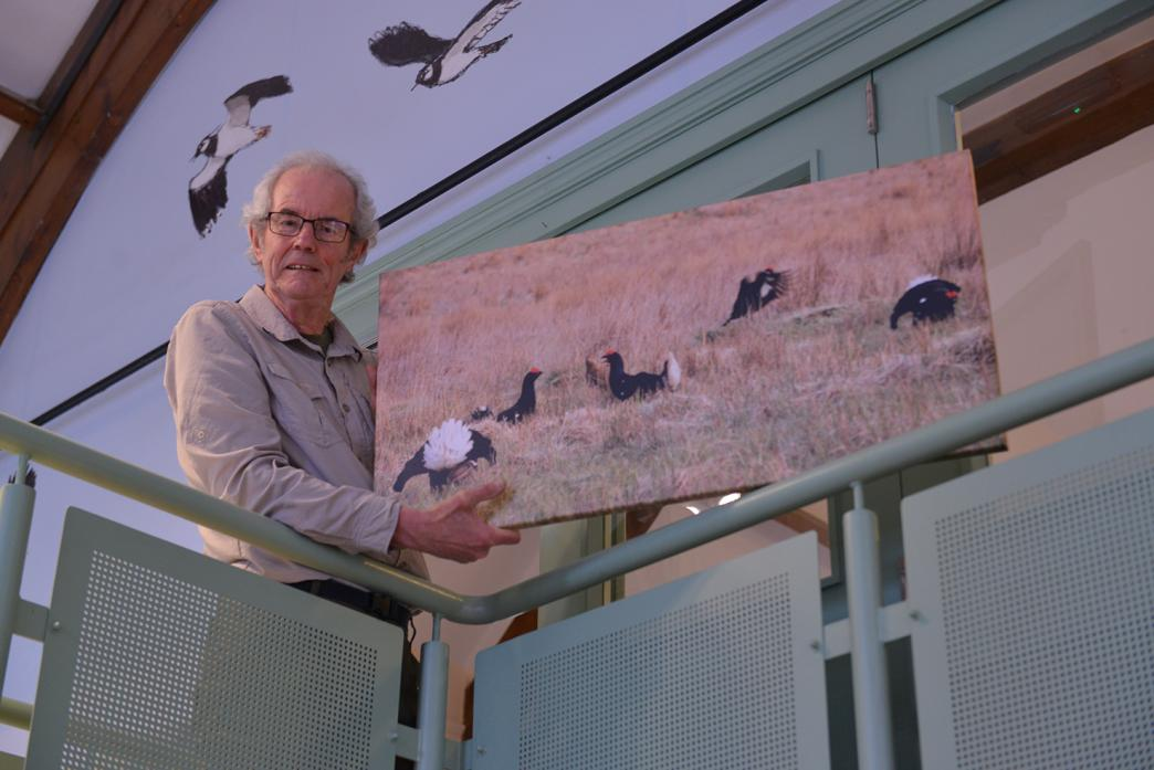 Martin Rogers prepares to hang a photograph of a black grouse lek for his latest exhibition at Bowlees Visitor Centre.