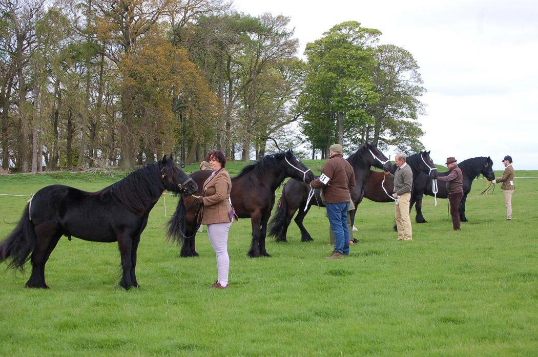 FAMILIAR SIGHT: The Dales Pony summer show is a regular event in the dale's calendar, but this year's has been cancellend due to an outbreak of equine influenza