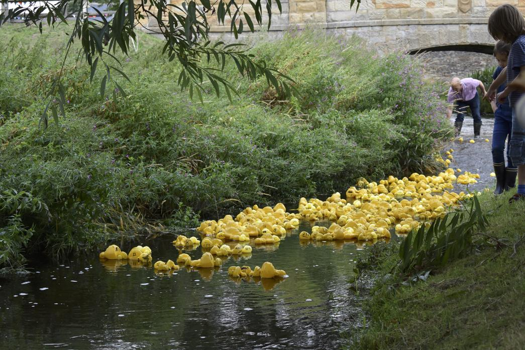 WEEK OF FUN: The duck race is always a popular competition at Aldbrough Feast