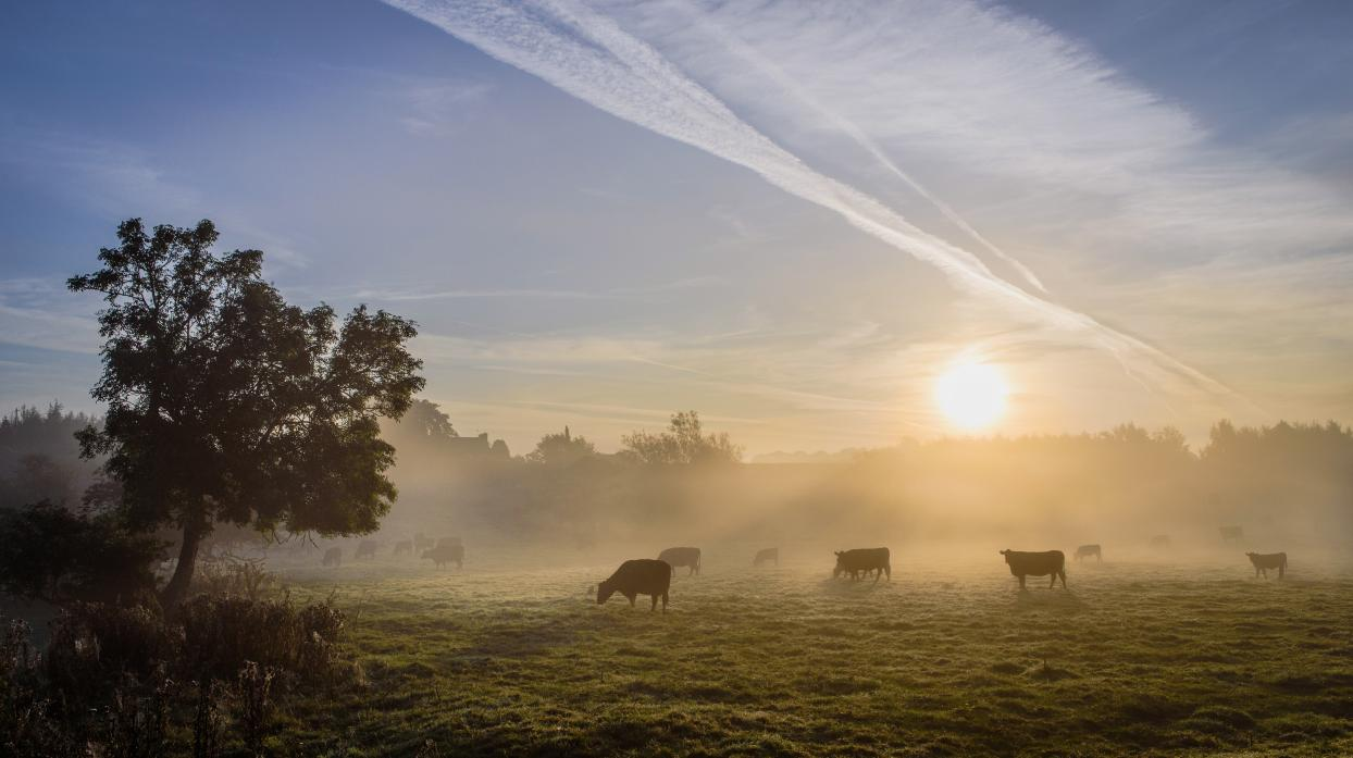 ANXIOUS WAIT: Is there a new dawn for farm tenancies?
