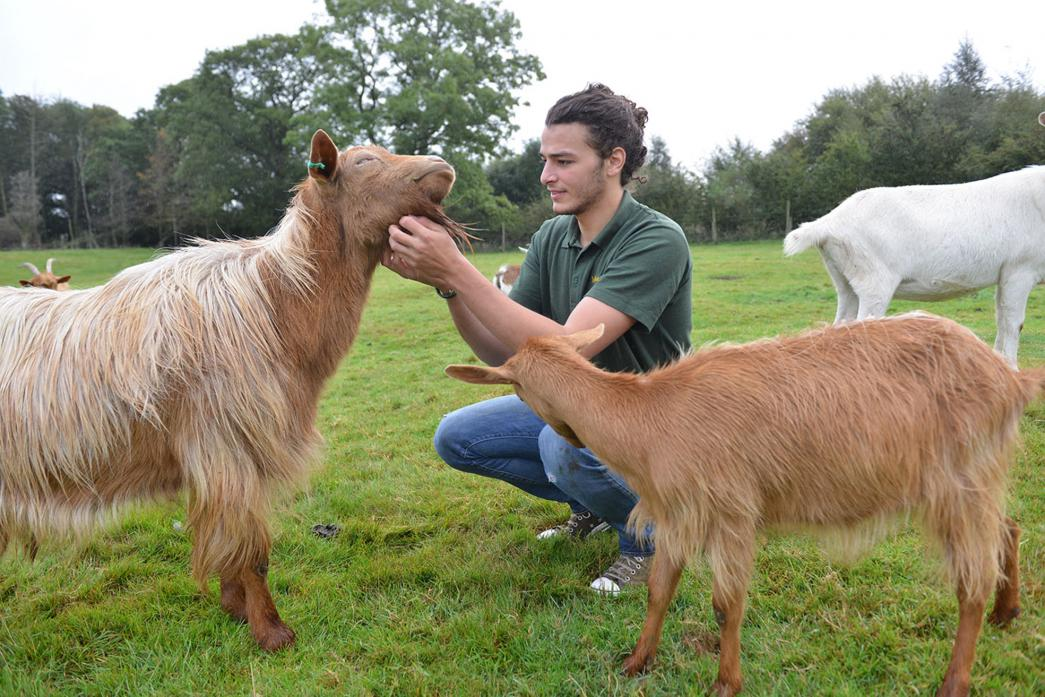 BON VOYAGE: French student Pierre Elichondoborde with the rare breed golden Guernsey goats at Wetheriggs Animal Rescue and Conservation Centre