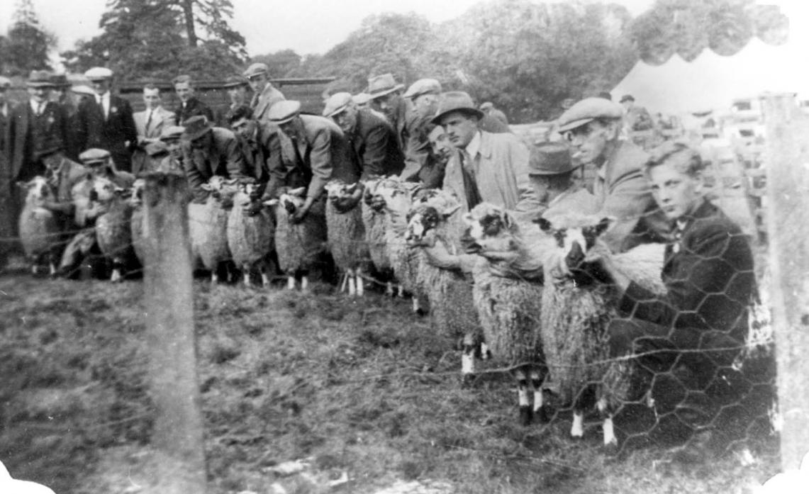 DALE TRADITIONS: Eggleston show 'half-breeds' in the 1940s, a period when agricultural shows took place across Teesdale. High Force Agricultural Show, like many others, is no more but a recently transcribed song gives a colourful description