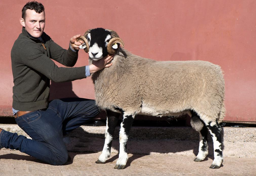SOUGHT AFTER: Michael Allinson with Allinsons' £45,000 Swaledale tup, sold to Geoff and Carol Marwood. Its semen sold for £900 at a charity auction  Picture: Wayne Hutchinson farm-images.co.uk