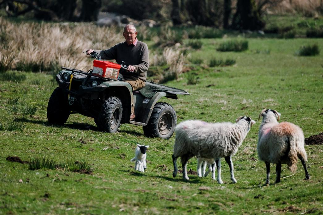 FARM TRADITIONS: Lambing season, 2020, caught on camera at Kexwith – a farm that has embraced the idea of 'wilding'