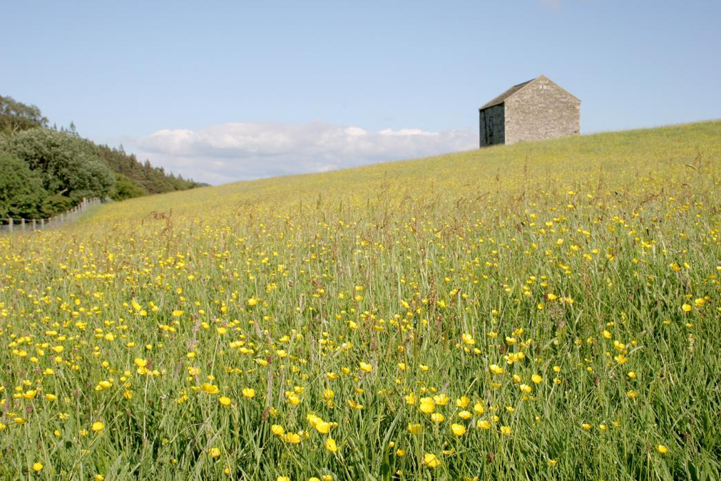 ENTICING SIGHT: Images such as this North Pennines wildflower meadow are being used to lure visitors back to the area as Covid-19 restrictions are eased
