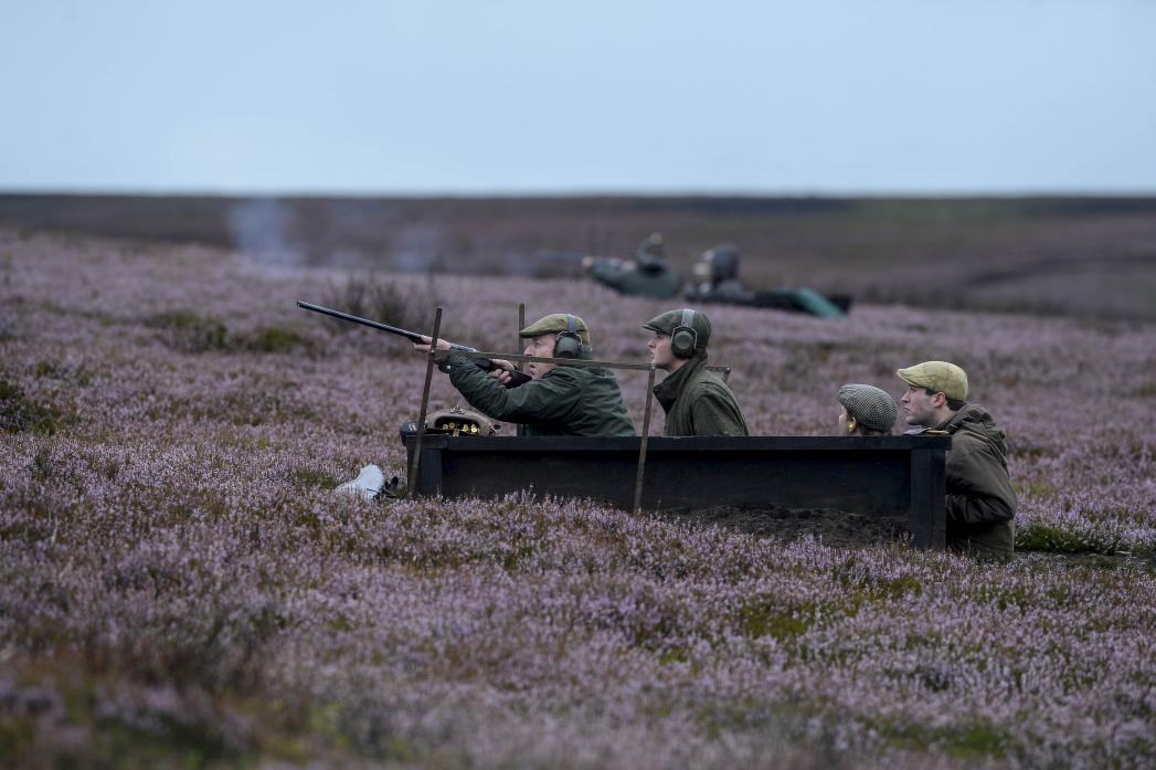 GROUSE GUNS: Moorland managers will soon begin their counts of grouse ahead of the shooting season