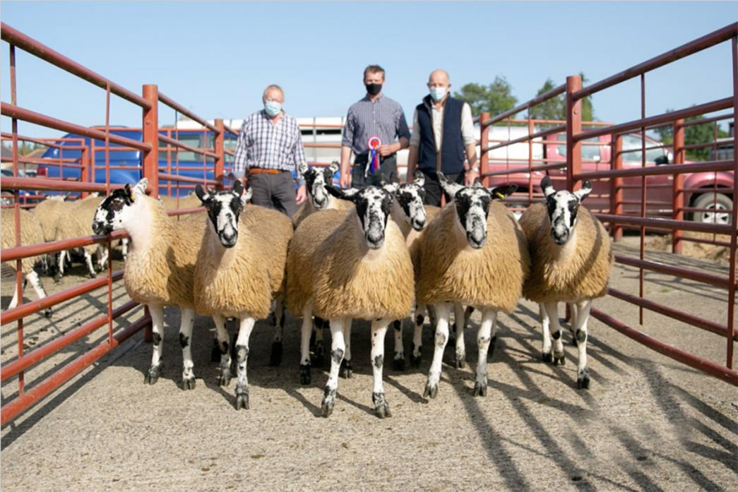 PRIZE LAMBS:  Left, the championship pen of lambs shown by Clive Metcalf, centre, with judges Martin Woodward and Trevor Foster from the show of Mule gimmer lambs for NEMSA members.