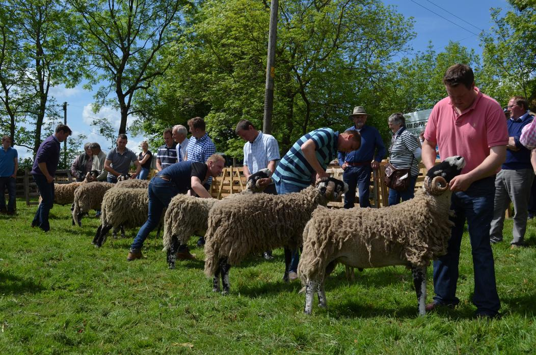 FRIENDLY AND WELCOMING: This year's Stainmore Sheep Show, which this year features classes for Herdwicks, takes place on Saturday