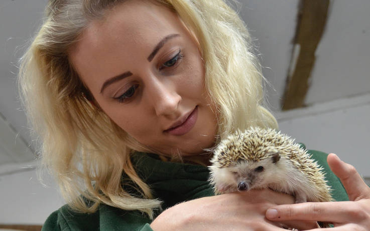 Highlighting prickly problem of the decline in hedgehogs