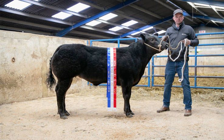 Champion heifer sells for a Barnard Castle mart record of £6,600