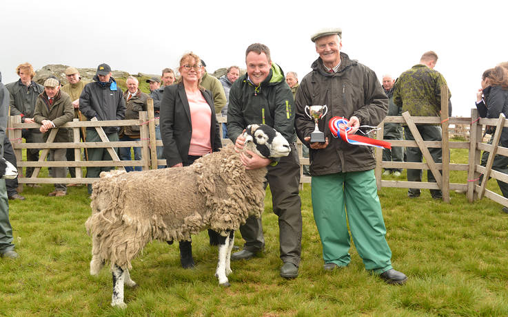 £50,000 ram is top in Swaledale sheep show