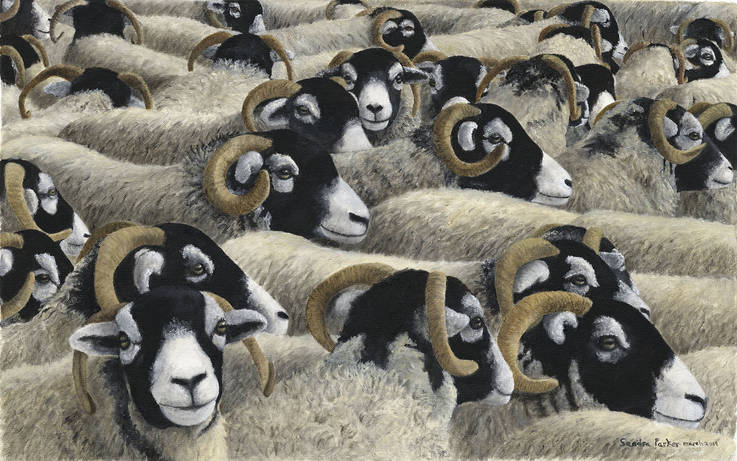 Artist's love affair with hardy Swaledale sheep breed