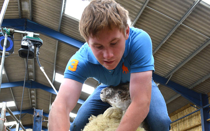 Young farmers brush up sheep shearing skills