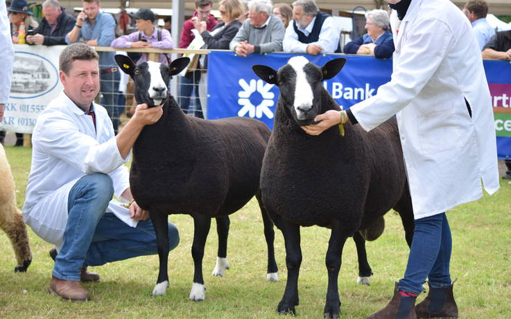 Sheep comes second in national title