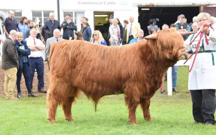 Top results from Great Yorks Show