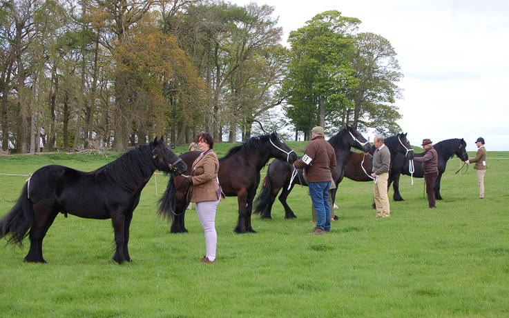 Dales Pony Show cancelled due to outbreak of equine flu