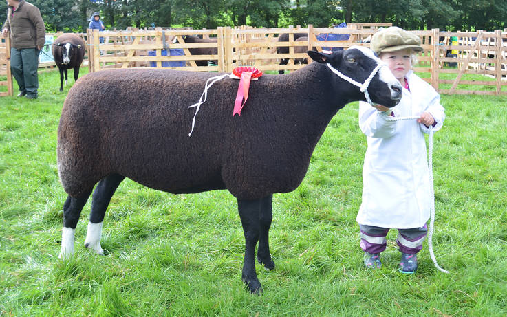 Terrier racing, perfect produce and a day to savour at Bowes Show this Saturday