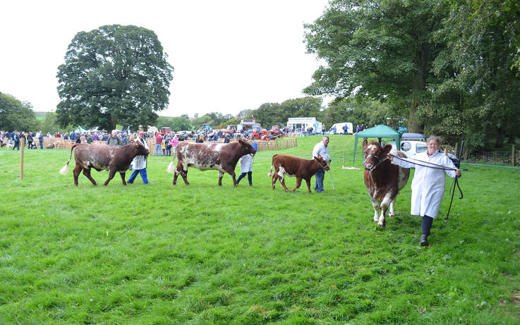 'Wait and see' for dale's agricultural shows