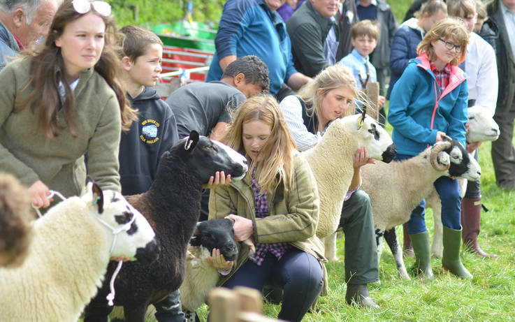 Organisers pull the plug on August's agricultural shows