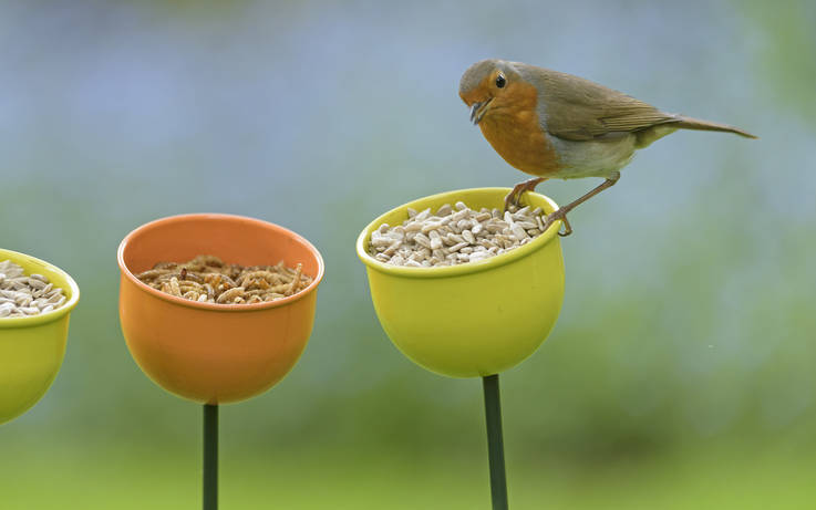 Watch the birdies...residents urged to join annual RSPB survey