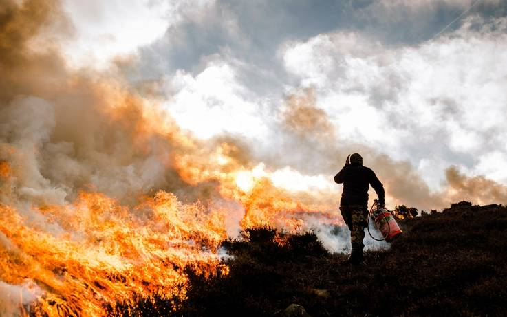 Questions remain over plans to licence bog heather burning